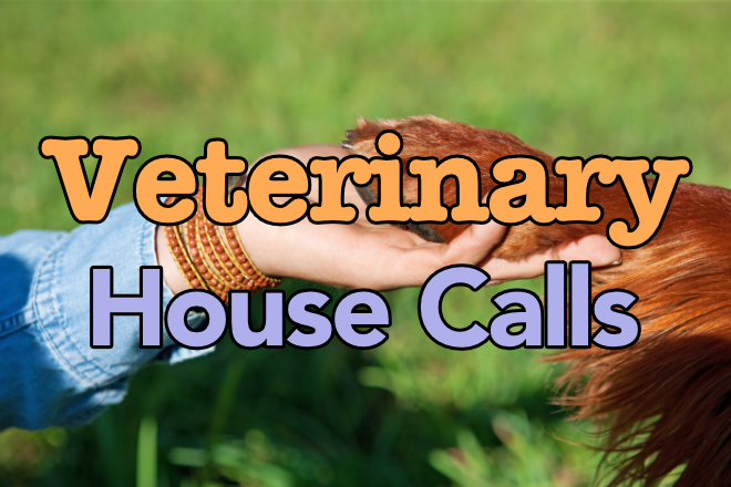 Veterinary House Calls - Dr. Loudon, Long Island, NY